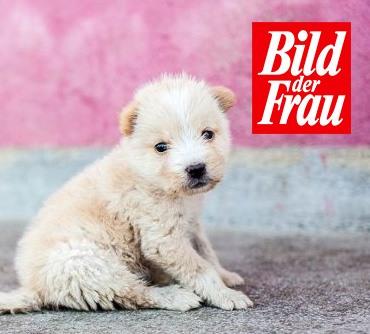 Pressebericht Spenden-Marathon für Tiere _Bild_der_Frau_2019
