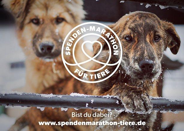 Spendenmarathon Flyer Bild