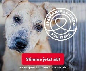 Spenden-Marathon fuer Tiere 2019