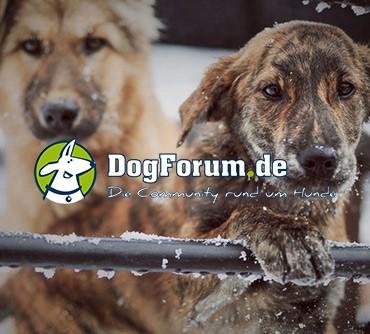 Pressebericht_Dogforum_Spenden-Marathon_fuer_Tiere_2019