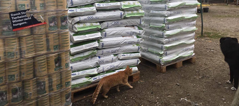 Initiative für Strassentiere e.V. Spendenankunft Spenden-Marathon für Tiere Rumänien Katze