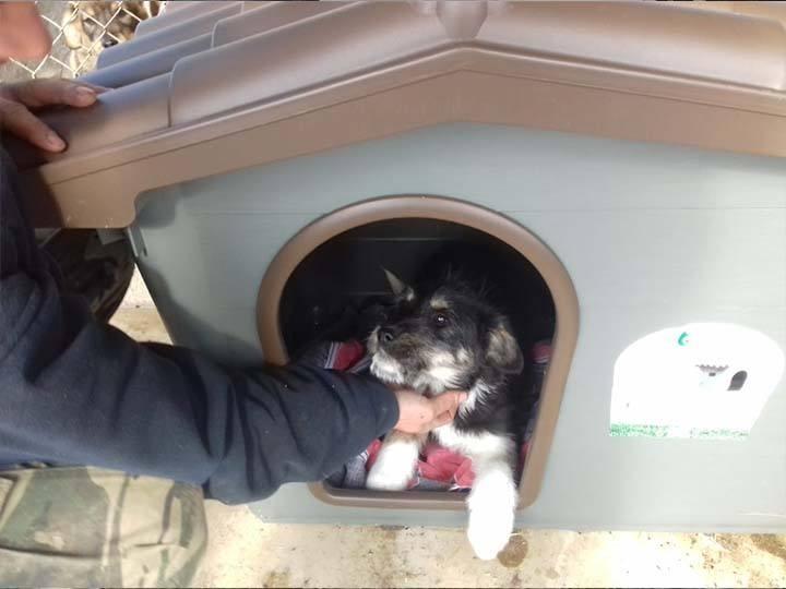 Freundeskreis der Strassenhunde in Campulung e.V.-Futterspendenankunft-februar-2020-Spenden-Marathon-2019-Rumänien (3)