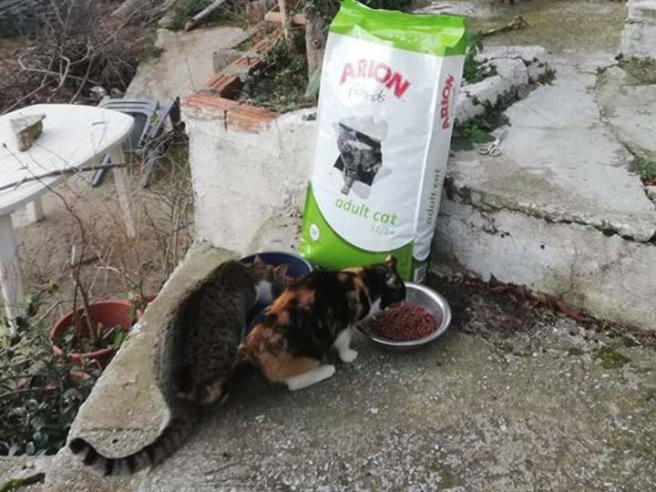 Frieden für Pfoten e.V.-Futterspendenankunft-februar-2020-Spenden-Marathon-2019-Griechenland (2)