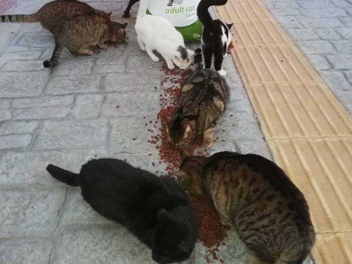 Frieden für Pfoten e.V.-Futterspendenankunft-februar-2020-Spenden-Marathon-2019-Griechenland (3)