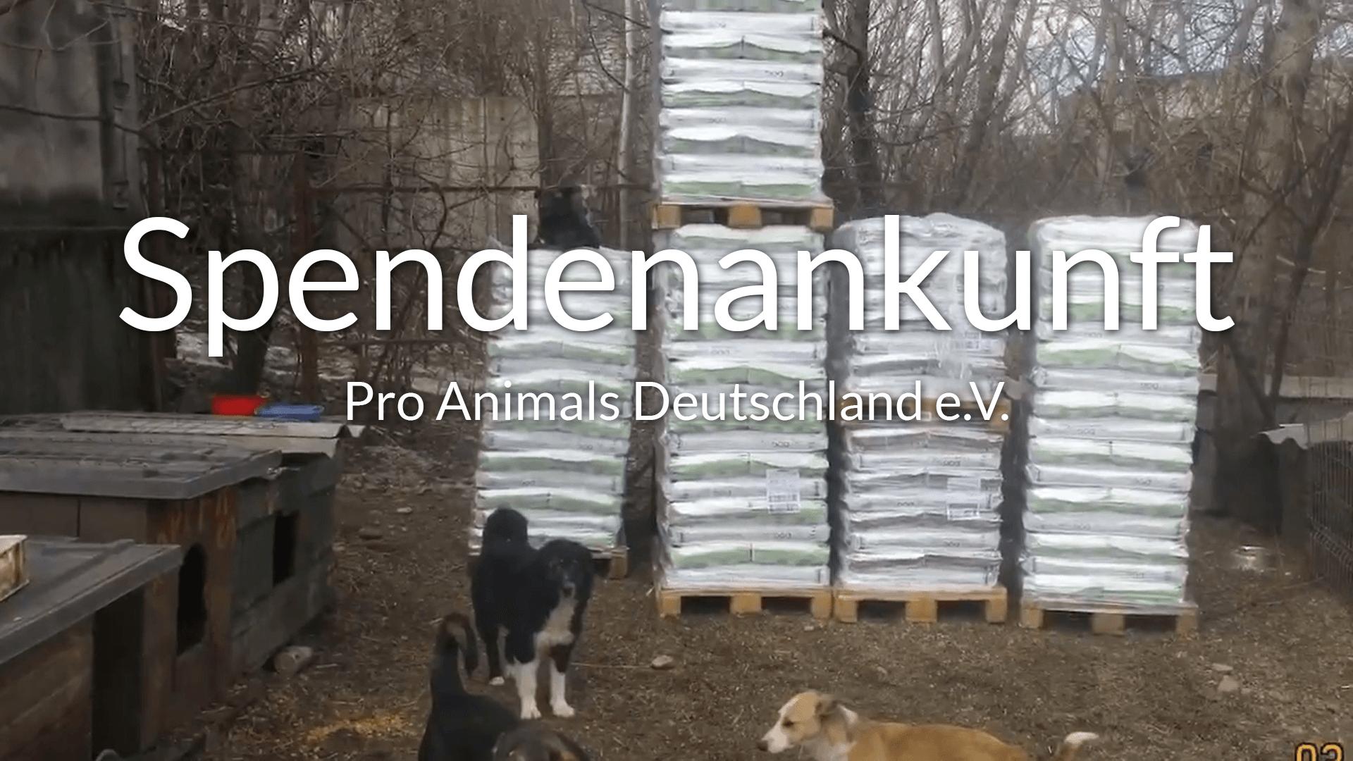 Pro-Animals-Deutschland_Thumbnail_Videos