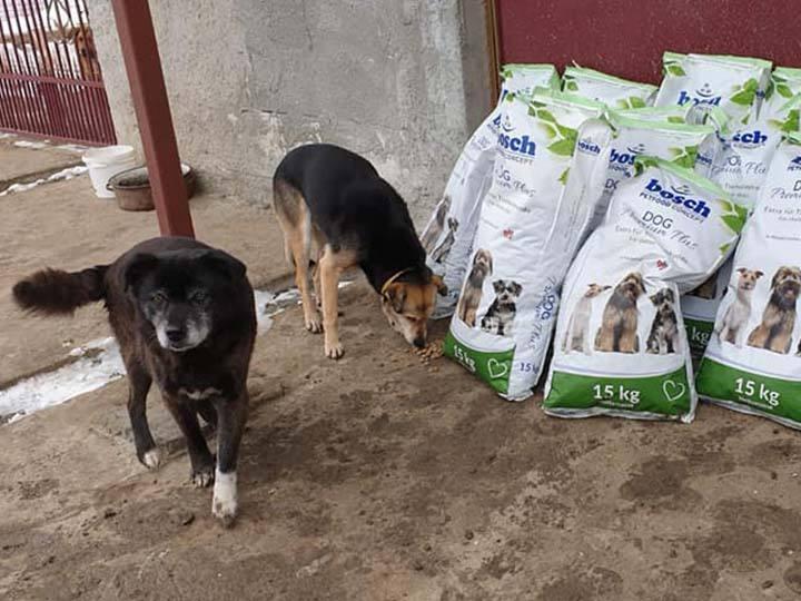 Salvate Canes e.V.-Futterspendenankunft-februar-2020-Spenden-Marathon-2019-Rumänien (2)