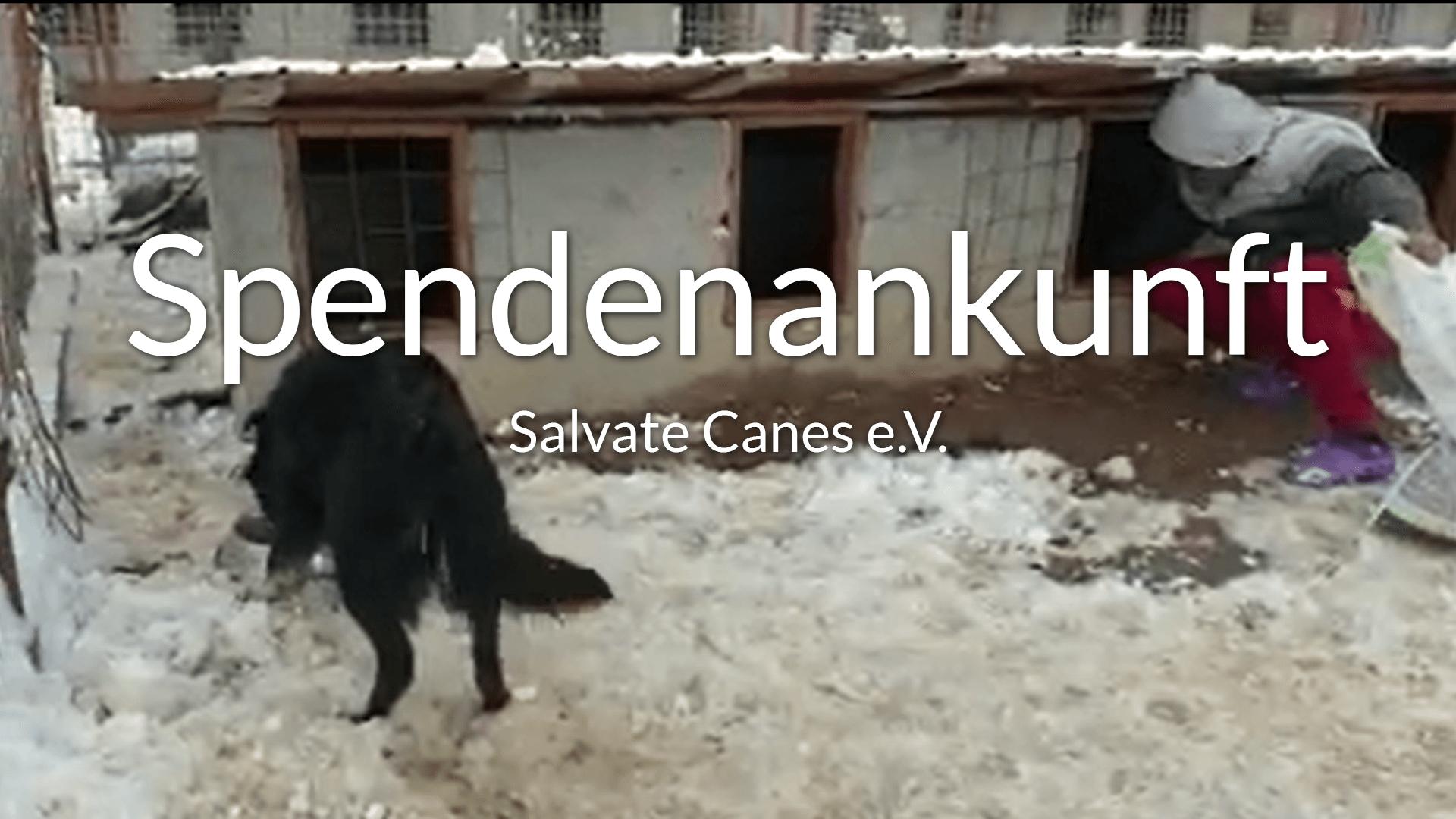 Salvate-Canes_Thumbnail_Videos