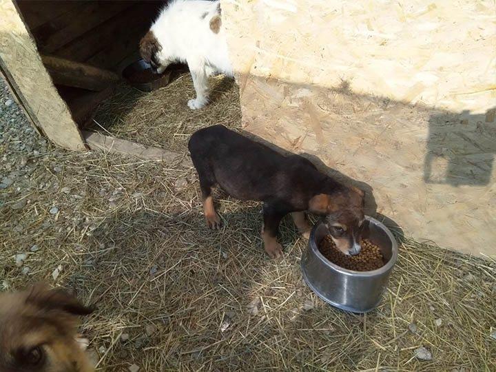 Freundeskreis der Straßenhunde in Campulung e.V.-Futterspendenankunft-maerz-2020-Spenden-Marathon-2019-Rumänien-1
