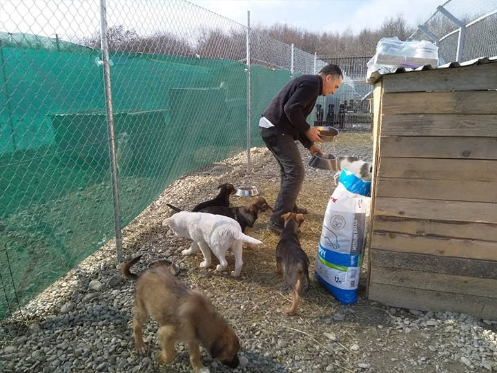Freundeskreis der Straßenhunde in Campulung e.V.-Futterspendenankunft-maerz-2020-Spenden-Marathon-2019-Rumänien-2