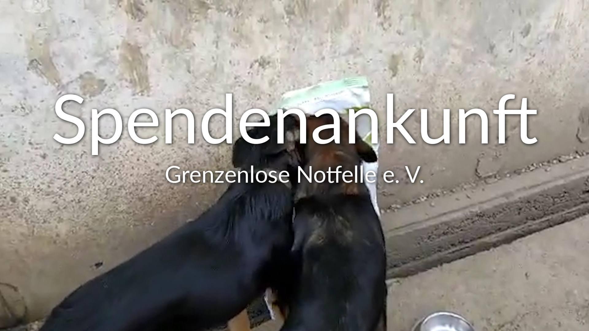 Grenzenlose Notfelle e.V.-Futterspendenankunft-maerz-2020-Spenden-Marathon-2019-Rumänien-VIDEO