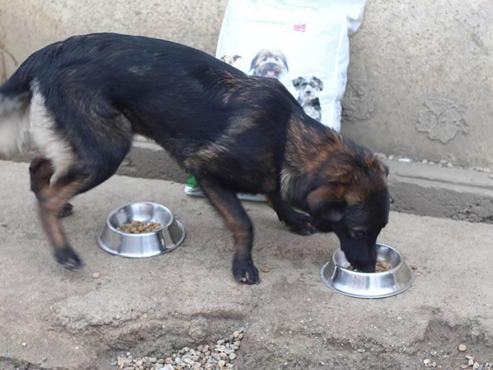 Grenzenlose Notfelle e.V.-Futterspendenankunft-maerz-2020-Spenden-Marathon-2019-Rumänien (4)