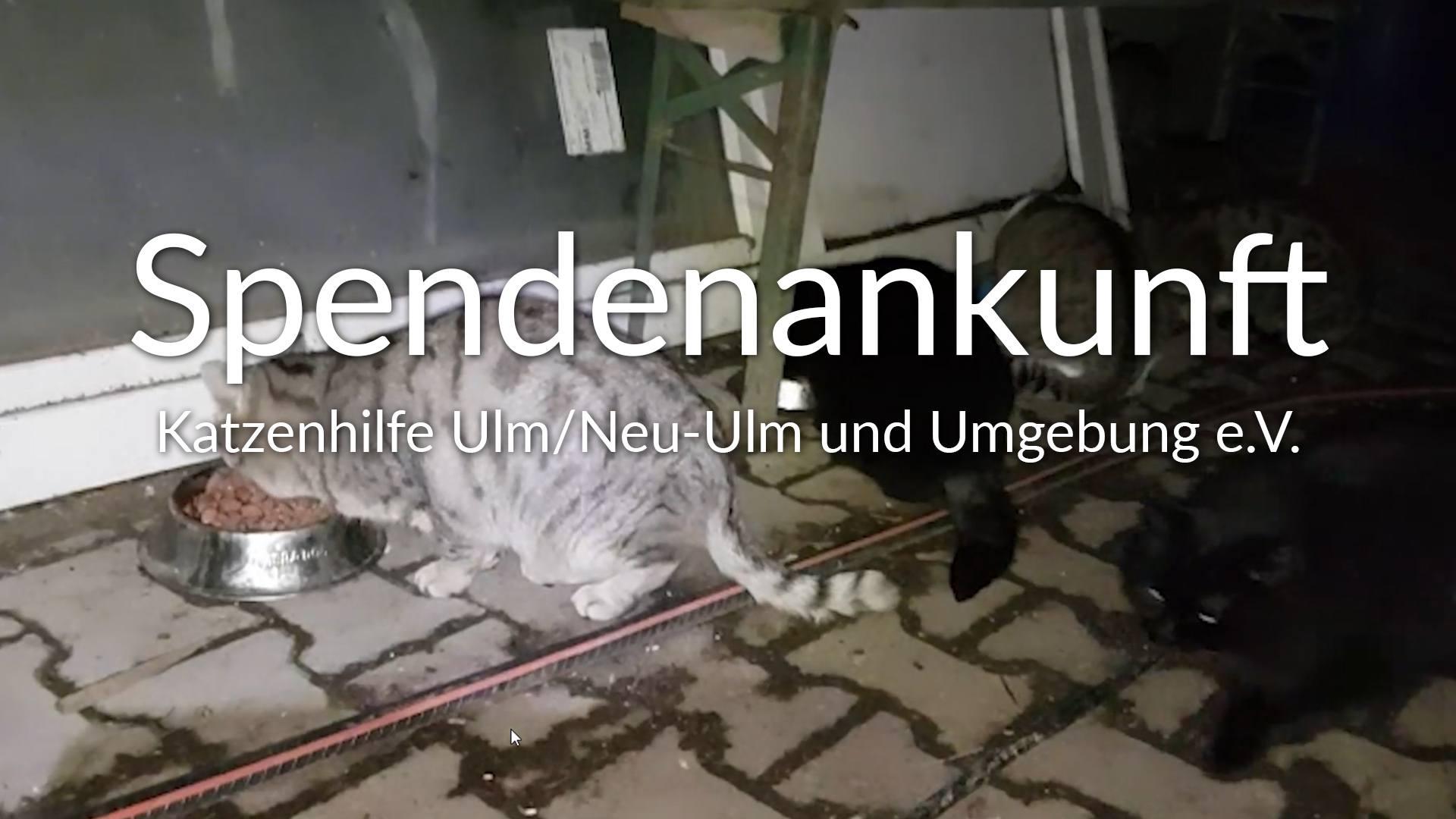 Katzenhilfe Ulm_Neu-Ulm und Umgebung e.V.-Futterspendenankunft-maerz-2020-Spenden-Marathon-2019-Deutschland-VIDEO