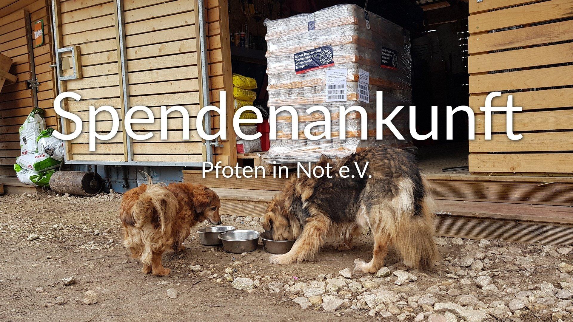 Pfoten in Not e.V.-Futterspendenankunft-maerz-2020-Spenden-Marathon-2019-Lettland-VIDEO