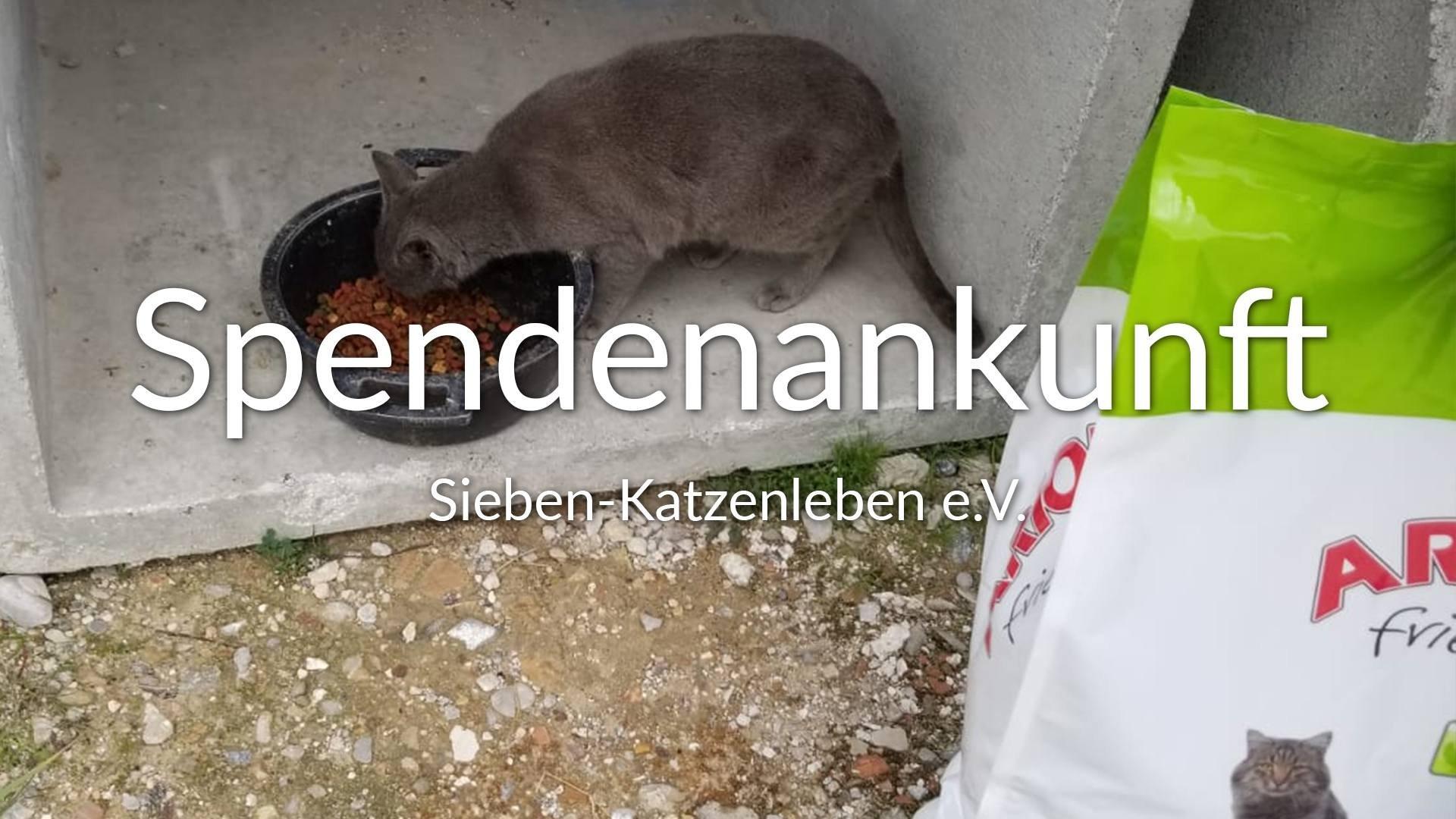 Sieben-Katzenleben e.V.-Futterspendenankunft-maerz-2020-Spenden-Marathon-2019-Spanien-VIDEO