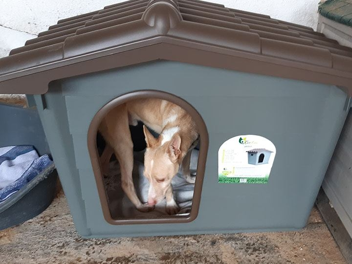 pro Hund andaluz e.V.-Futterspendenankunft-maerz-2020-Spenden-Marathon-2019-Spanien(3)