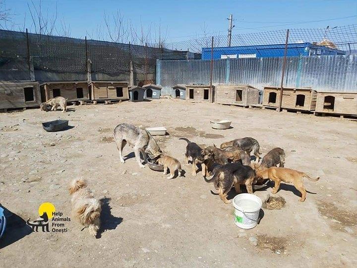 SpecialDogs e.V.-Futterspendenankunft-SM 2019-Rumänien (4)