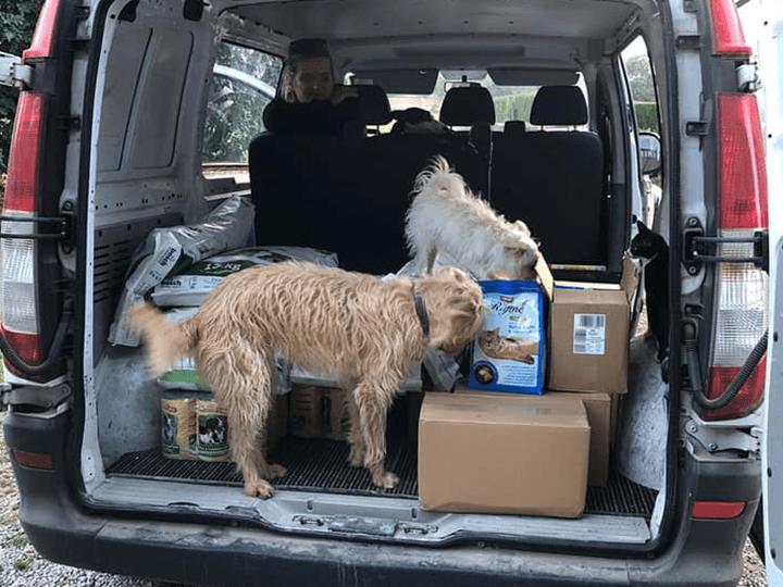 Ein-Zuhause-für-verlassene-Tiere-e.V.-Futterspendenankunft2019-Spenden-Marathon2018-Spanien(2)