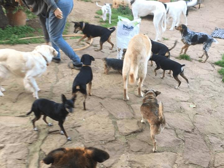 Ein-Zuhause-für-verlassene-Tiere-e.V.-Futterspendenankunft2019-Spenden-Marathon2018-Spanien(4)