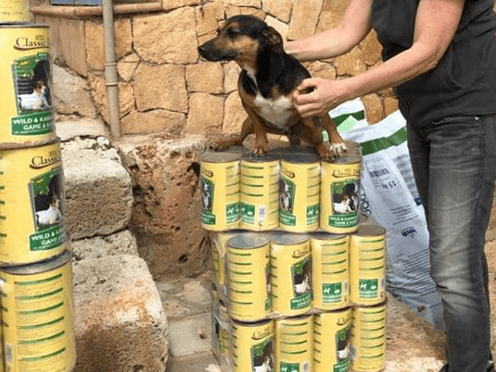 Ein-Zuhause-für-verlassene-Tiere-e.V.-Futterspendenankunft2019-Spenden-Marathon2018-Spanien(5)