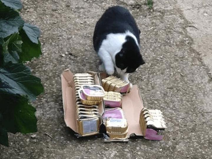 Ein-Zuhause-für-verlassene-Tiere-e.V.-Futterspendenankunft2019-Spenden-Marathon2018-Spanien(7)