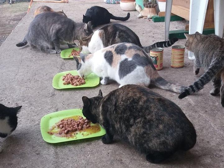 Katzenhilfe-Pfotenschutz-Bulgarien-e.V.-Futterspendenankunft2019-Spenden-Marathon2018-Bulgarien(1)