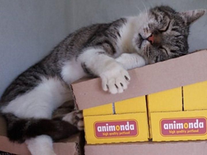Katzenhilfe-Pfotenschutz-Bulgarien-e.V.-Futterspendenankunft2019-Spenden-Marathon2018-Bulgarien(2)
