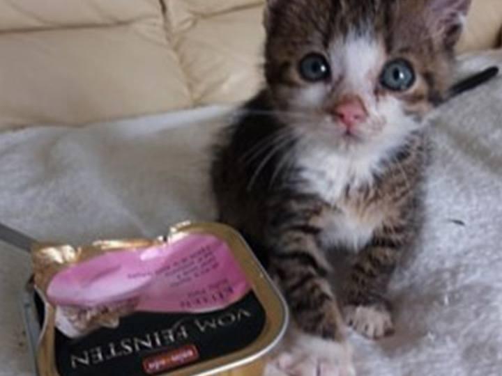 Katzenhilfe-Pfotenschutz-Bulgarien-e.V.-Futterspendenankunft2019-Spenden-Marathon2018-Bulgarien(3)