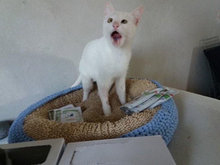 Katzenhilfe-Pfotenschutz-Bulgarien-e.V.-Futterspendenankunft2019-Spenden-Marathon2018-Bulgarien(4)
