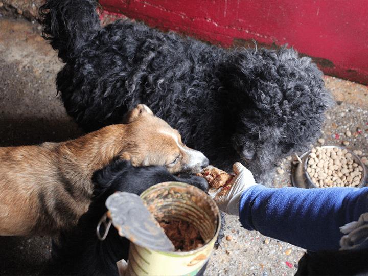 Pet-Crew-e.V.-Futterspendenankunft2019-Spenden-Marathon2018-Rumänien(2)