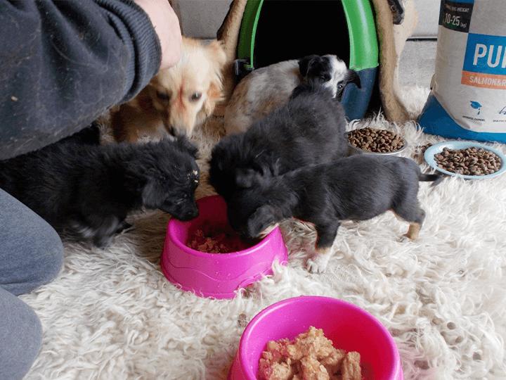 Pro-Animals-Deutschland-e.V.-Futterspendenankunft2019-Spenden-Marathon2018-Rumänien(4)
