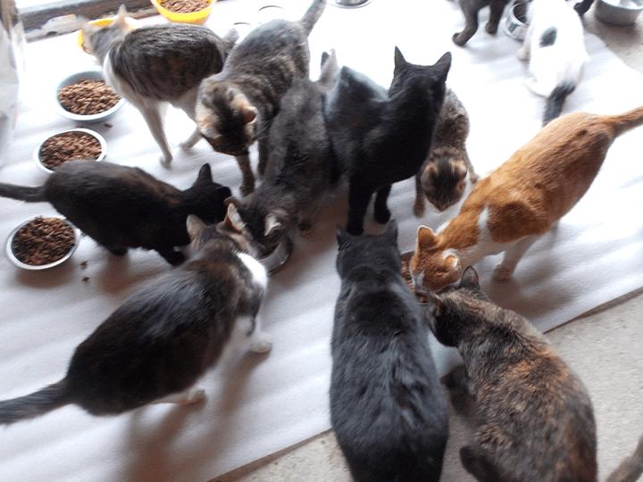 Pro-Animals-Deutschland-e.V.-Futterspendenankunft2019-Spenden-Marathon2018-Rumänien(5)
