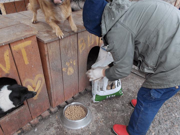 Pro-Animals-Deutschland-e.V.-Futterspendenankunft2019-Spenden-Marathon2018-Rumänien(6)