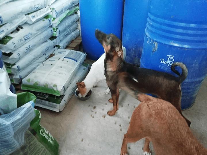 Pro-Hund-andaluz-e.V.-Futterspendenankunft2019-Spenden-Marathon2018-Spanien(2)