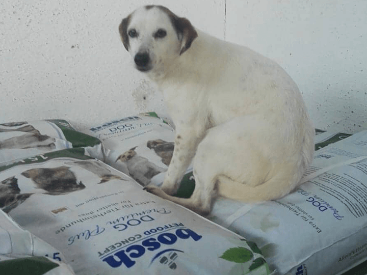 Pro-Hund-andaluz-e.V.-Futterspendenankunft2019-Spenden-Marathon2018-Spanien(3)
